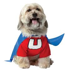 dog halloween costumes images 6 safe pet halloween costumes for your dog teleflora blog