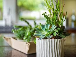 Succulents That Don T Need Light How To Care For Succulents Diy Network Blog Made Remade Diy