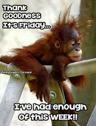 Happy Friday Meme Funny - beec6183d0bb1a3cb3b3b46b571cd6ba jpg 640纓838 good morning