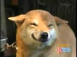 Smiling Dog Meme - happy smiling dog in japan mp4 youtube