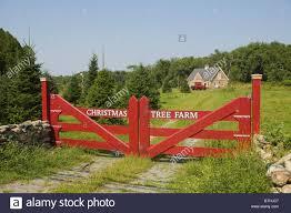 christmas tree farm stock photos u0026 christmas tree farm stock