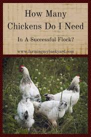 get started keeping chickens farming my backyard