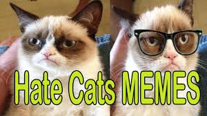 Funny Grumpy Cat Meme - funny grumpy cat memes hilarious cats memes ever 2017 youtube
