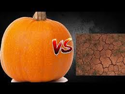 Smashing Pumpkins Halloween - smashing pumpkin 5 subscriber special youtube