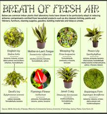 best plants for air quality 10 best plants for improving air quality raven tao big city