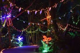 garvan gardens christmas lights 2016 selby gardens lights in bloom dera jobs wallpaper