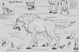 Human Anatomy Images Free Download Wolf Anatomy Drawing Human Anatomy Wolf Anatomy Top 10 Free