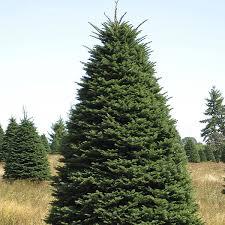 shawn christmas trees lots los angeles ca