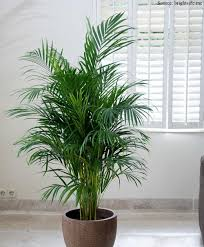 18 houseplants that purify indoor air renomania