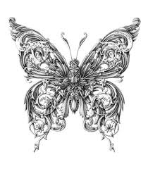 detailed insect illustrations by alex konahin butterfly drawing