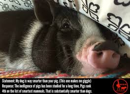 a blog about various topics that may affect mini pigs mini pig info
