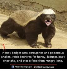 Honey Badger Meme - 25 best memes about honey badger honey badger memes