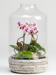orchid terrarium plants robertson u0027s flowers