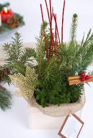 23 best christmas plant decorations christmas trees christmas