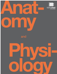 Images Of Human Anatomy And Physiology Open Textbook Library