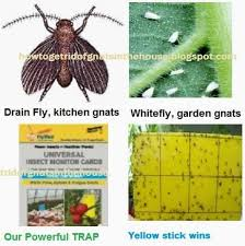 How To Get Rid Of Backyard Flies by Get Rid Of Insects U2013 How To Get Rid Of Gnat