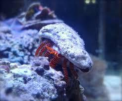what u0027s your favorite hermit crab reeftank