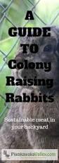 109 best rabbit production images on pinterest meat rabbits