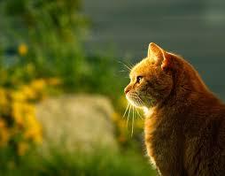 fotos para o perfil gato sundown perfil foto gratuita no pixabay