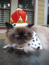 Cat Halloween Costumes Cats 196 Cats Hats Stylish Attire Images