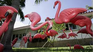 history of the pink flamingo cnn