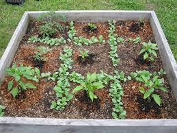square foot gardening herbs