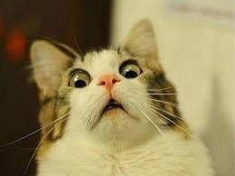 Grumpy Cat Meme Generator - download cat meme maker super grove