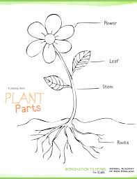 download plant parts coloring pages and activities herbs for