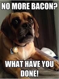 Funny Meme Dog - pin funny dog memes on pinterest catalogo music 80s90s