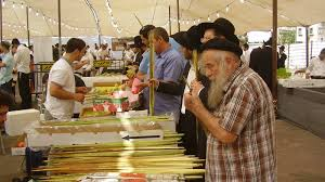 etrog for sale how to buy a lulav and etrog my learning