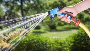 watering trees and shrubs tree frog tree care