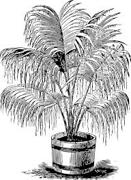 palm tree svg shrubs clipart