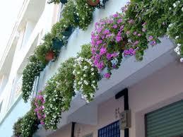 vinca flowers hanging vinca flowers garden ideas flowers
