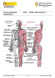 calaméo physical education 4º eso bones and muscles worksheet