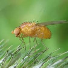 How To Get Rid Of Backyard Flies by How To Get Rid Of Gnats Outside U2013 How To Get Rid Of Stuff