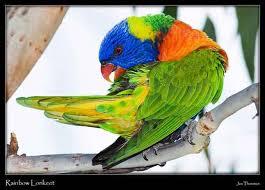 لمحبى اللون الاخضر images?q=tbn:ANd9GcQ