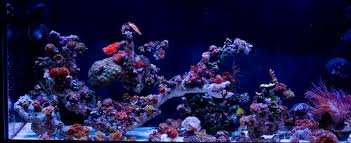 Marine Aquascaping Techniques Unique Aquascaping Ideas Needed The Reef Tank
