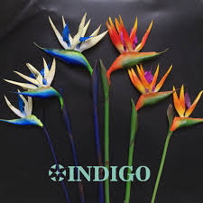 flowers free shipping indigo single flower 3 sizes bird of paradise plastic artificial