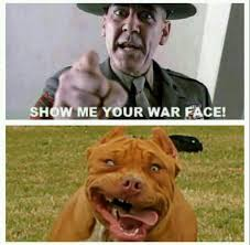 War Face Meme - show me your war face funny pinterest funny animal and funny