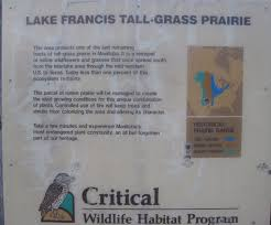 manitoba native plants travels with the bear a rare visit to manitoba the deep friar