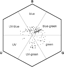 bee color hexagon loci sample flower species plotted bees