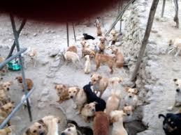 cani in cerca di casa sos a ventimiglia 108 cani cercano casa animali