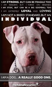 american pitbull terrier wanted best 25 pit bull quotes ideas only on pinterest are pit bulls