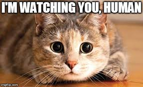 I M Watching You Meme - image tagged in i m watching you imgflip
