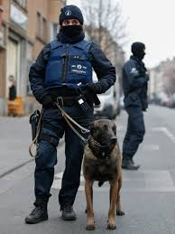 belgian malinois little rock belgian police officer with belgian malinois our best friends