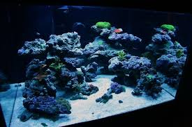 Aquarium Aquascapes On The Rocks How To Build A Saltwater Aquarium Reefscape Saltwater