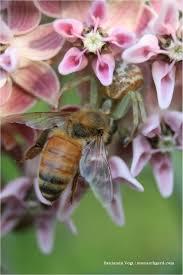 iowa native plants gardening for beneficial native bees l magazine journalstar com