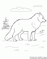 coloring page arctic fox