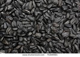 black sunflower seeds texture background stock photo 413837755