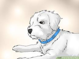 Do Bed Bugs Get On Dogs 4 Ways To Get Rid Of Fleas Wikihow